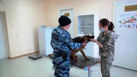 Вести. Кинологи костромской полиции показали студентам собачью жизнь