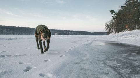 """Древние """"собаки"""" жили рядом с предками человека ещё 1,8 миллиона лет назад"""
