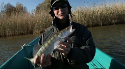 Диалоги о рыбалке. Астрахань. Судак и щука