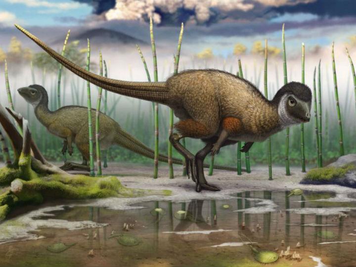 Окаменелости из долины Кулинда Забайкальского края подтвердили теорию о том, что большинство видов динозавров было покрыто перьями ещё до того, как они разделились на плотоядных и травоядных