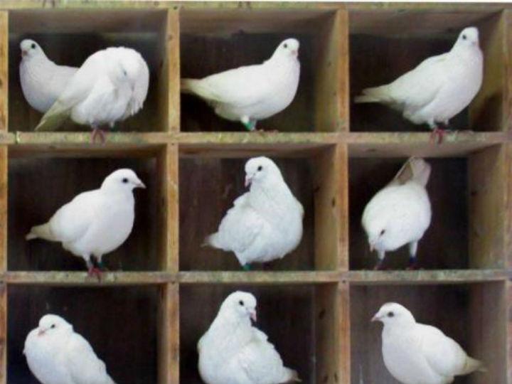 Два голубя могут поделить одну ячейку в голубятне, а две частицы не могут