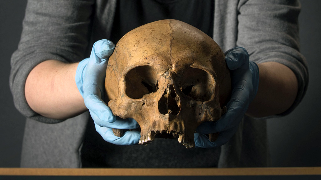 Череп, найденный при раскопках в Лондоне. Фото: Museum of London