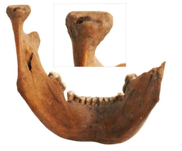 На одной из челюстей были найдены отпечатки собачьих зубов