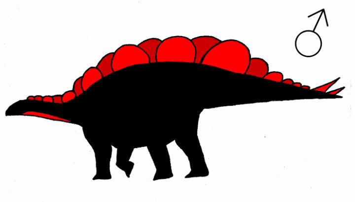 Внешний вид самца стегозавра, по мнению автора новой работы