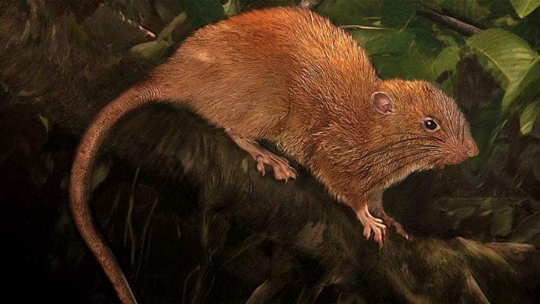 Животное достигает примерно 46 сантиметров в длину (от носа до хвоста).