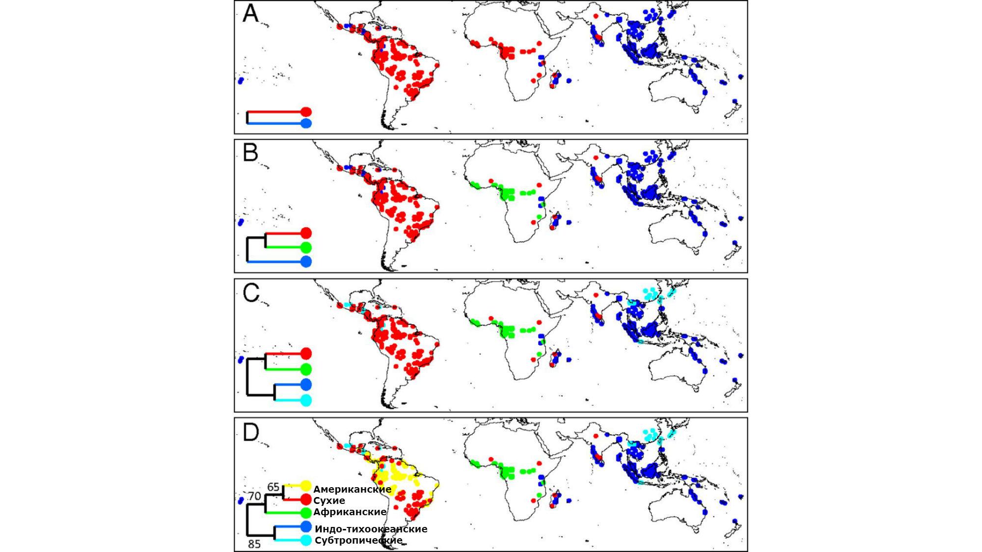 Филогенетическая классификация тропических лесов (Африка, Евразия, Австралия и острова Тихого и Индийского океанов). Показано постепенное разделение (цифры √ миллионы лет).