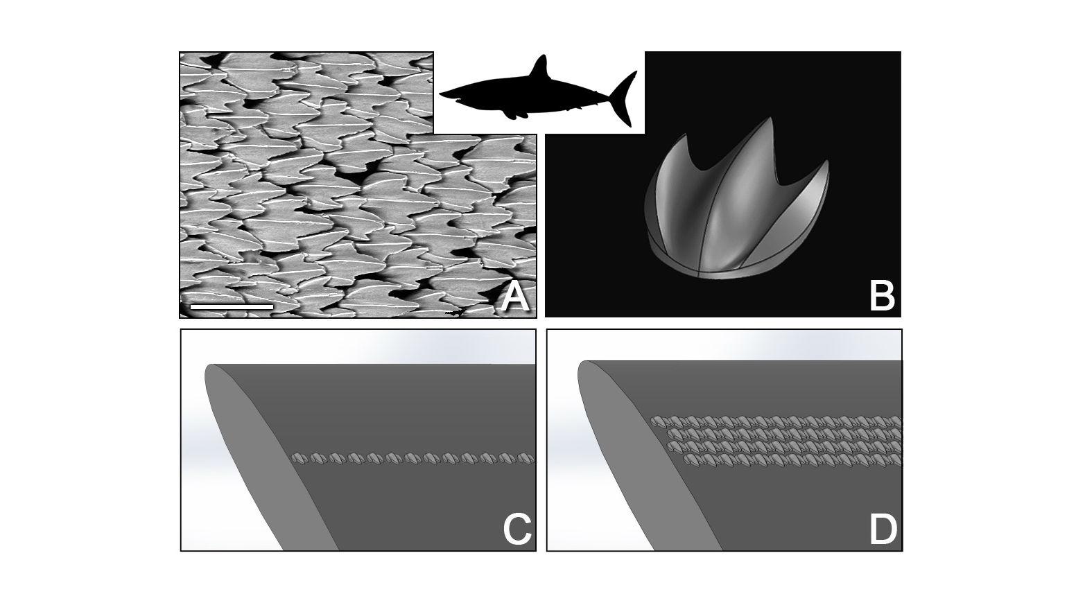 Изображение чешуи акул-мако, полученное при помощи сканирующего электронного микроскопа (А), и его параметрическая трёхмерная модель (B). Такие чешуйки расположены в широком диапазоне различных конфигураций на аэродинамическом профиле (C и D).