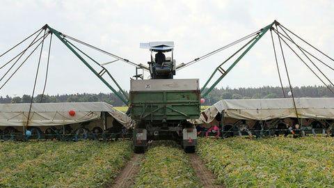 Испанские партнёры уже разработали камеру, которая определяет местоположение овощей с 95-процентным успехом.