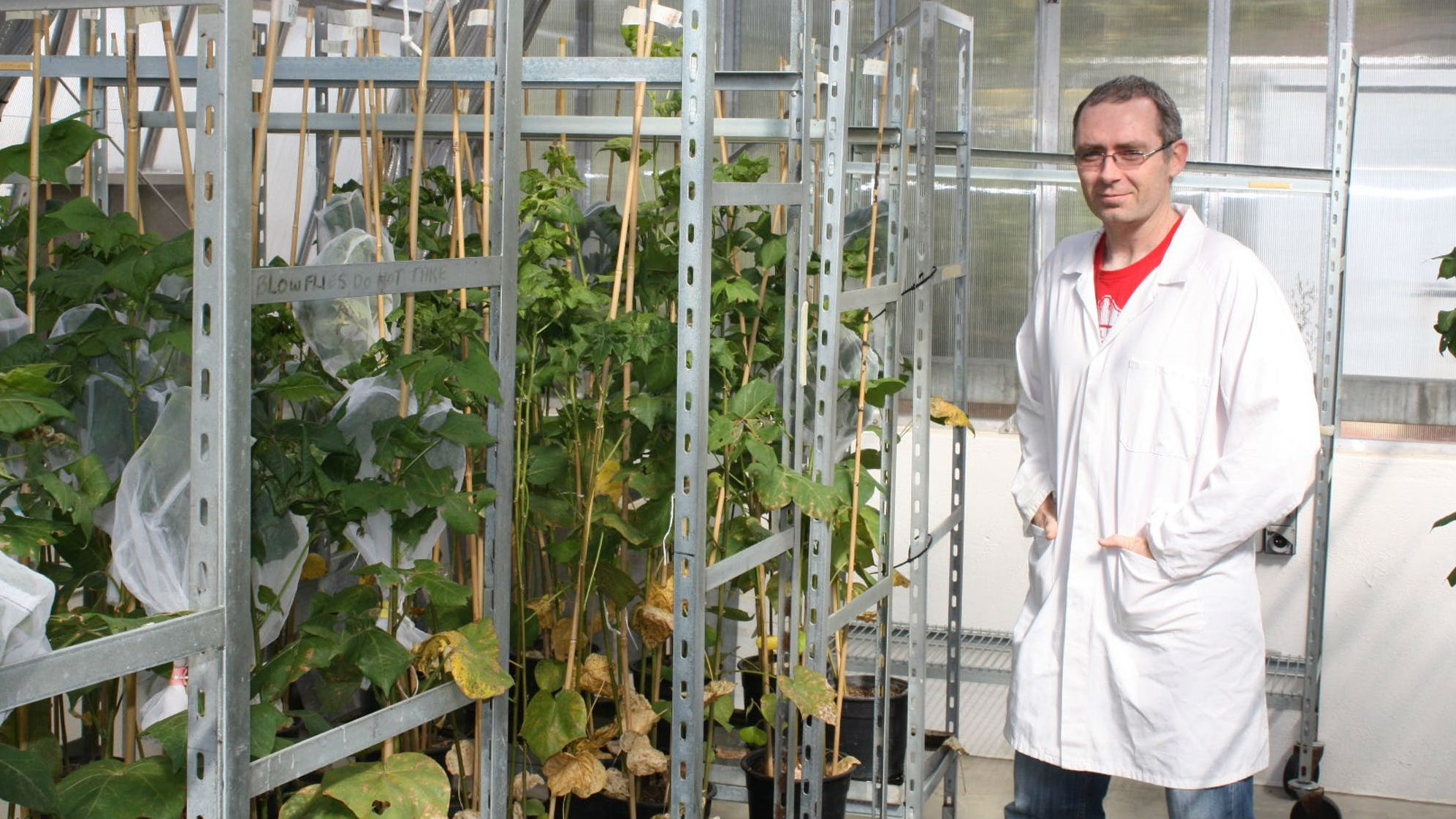Исследователи серьёзно обеспокоены возможным распространением нового сельскохозяйственного вредителя по миру.