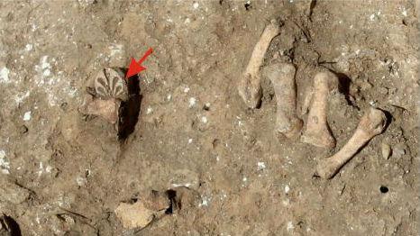 """Детали кифары, найденные в погребении некрополя поселения """"Волна-1""""."""