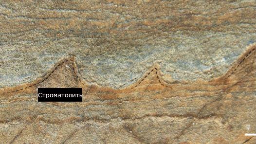 Строматолиты – осадочные образования, созданные в ходе роста микробных колоний на мелководье.