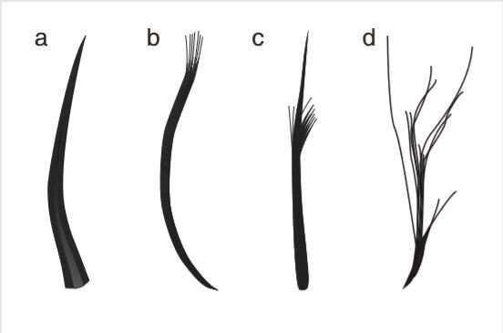Четыре типа перьев птерозавра.