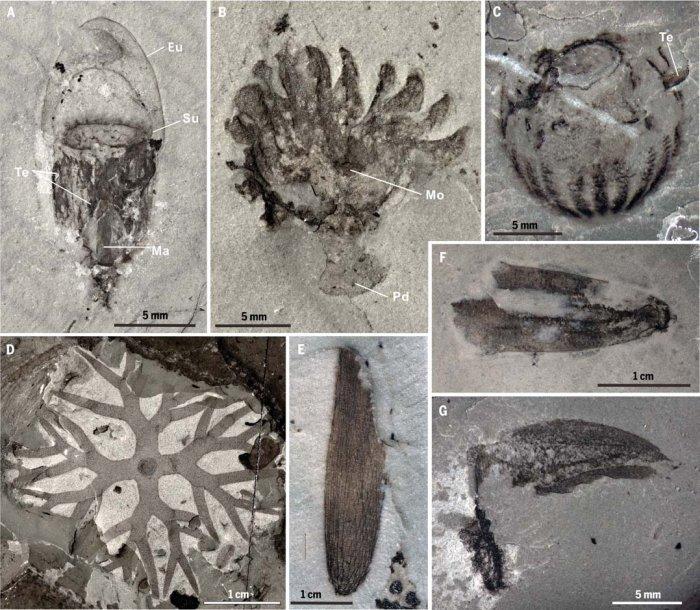 Палеонтологи нашли окаменелые останки медуз, гребневиков, членистоногих и водорослей.