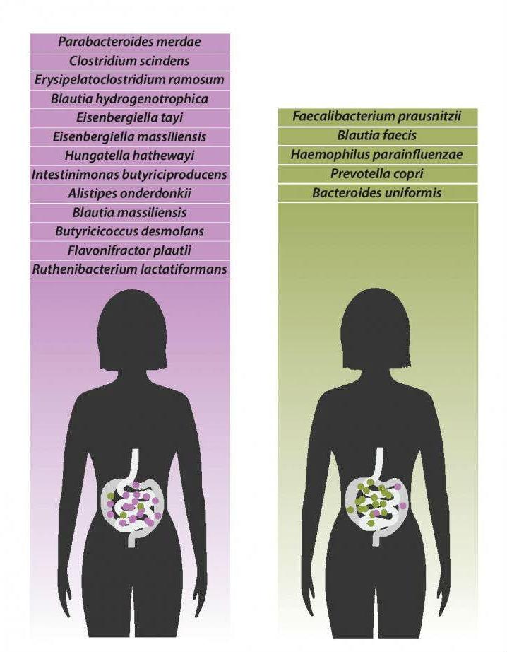 Виды бактерий, которые были обнаружены в больших количествах у пациентов с фибромиалгией (слева), по сравнению с видами бактерий, которые были найдены в больших количествах у здоровых людей (справа).