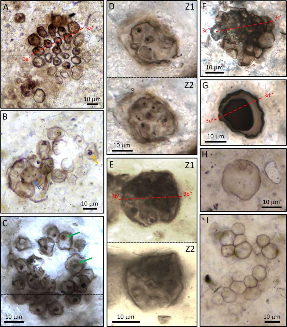 Невероятно хорошо сохранившиеся микроскопические окаменелости, обнаруженные на западе Шотландии.