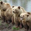 В Сахалинском зоопарке медведи раньше времени вышли из спячки