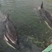 «Китовая тюрьма» опустела