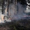 Леса в Красноярском крае исчезают в несколько раз быстрей, чем восстанавливаются