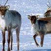 Свердловская область расширила охраняемые природные территории