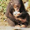 Эволюция манипуляторной активности приматов