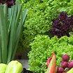 Укрепляем здоровье с помощью зелени