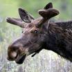 Минприроды в 400 раз подняло оценку стоимости всех зверей в России