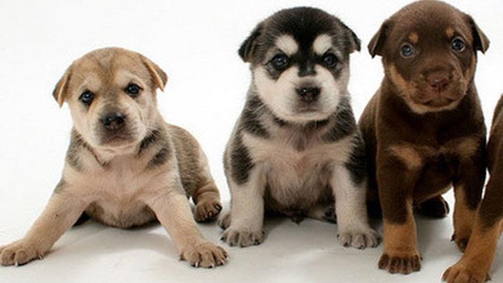 В Уфе неизвестные выбросили в ливневый сток пакет с щенками