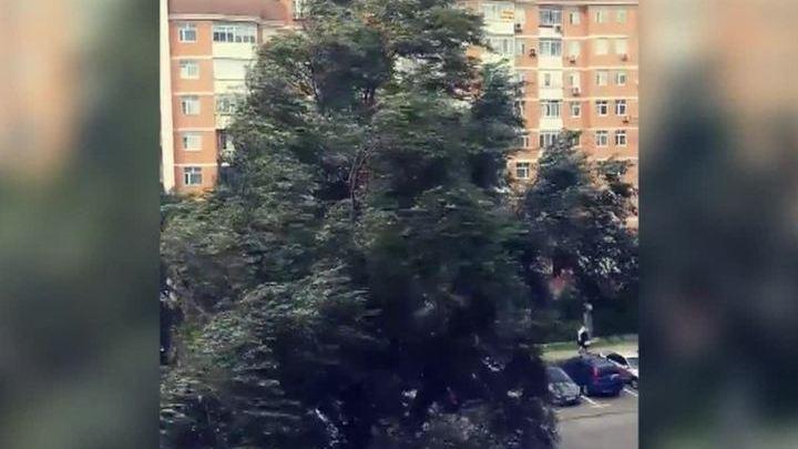 Сильный ветер повалил в Москве за сутки около 20 деревьев