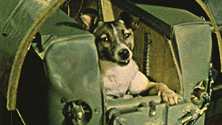 Собака Лайка первой полетела в космос.