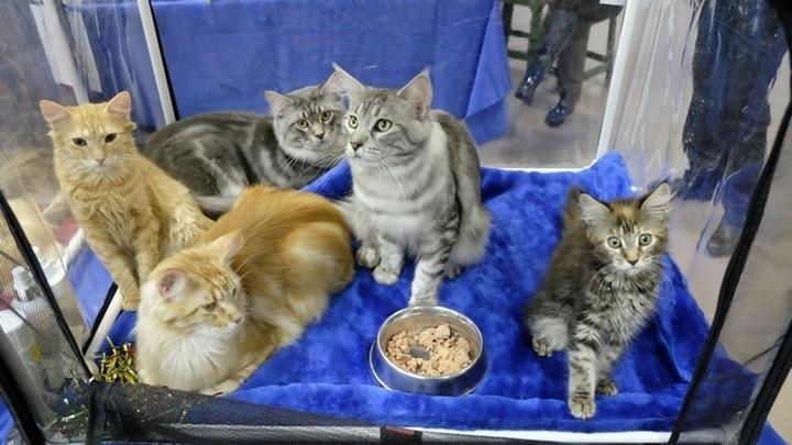 Выставка кошек.