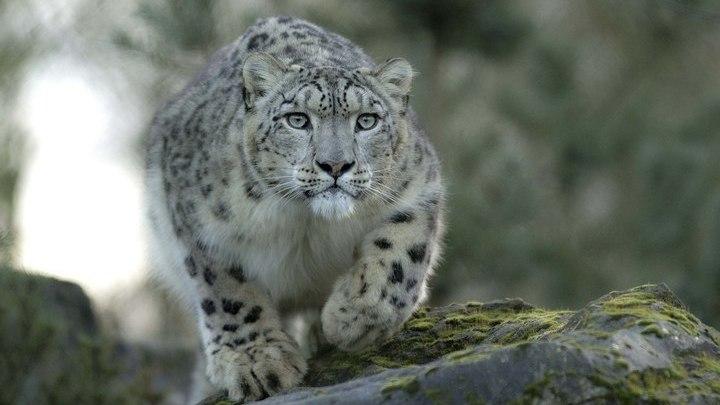 Маяк ПРО. Вымирающие животные