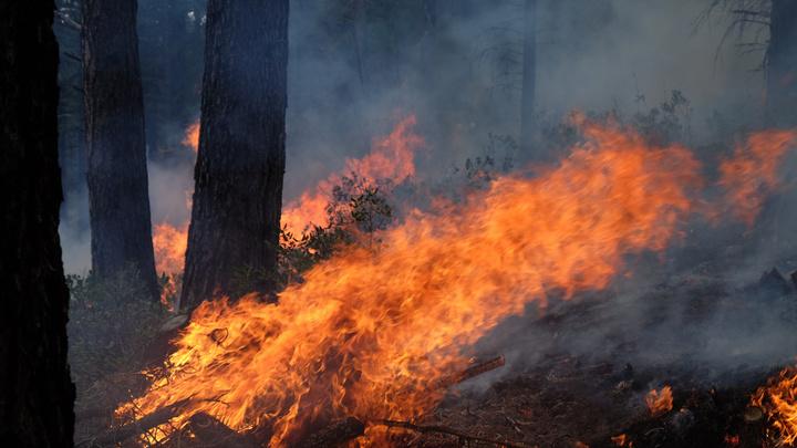 В пригородах Афин тушат лесные пожары с применением авиации