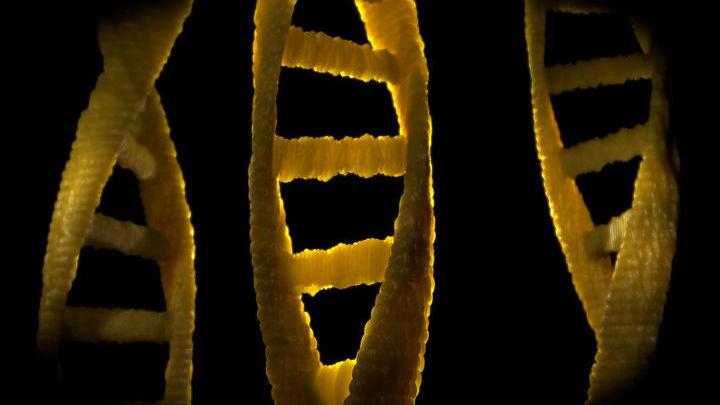 """ДНК является своего рода """"красной тряпкой"""" для иммунных клеток."""