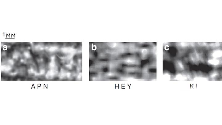 Ранее идентифицированные буквы