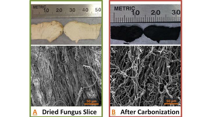 Волокнистая структура сырого гриба (слева) и углеродные волокна после пиролиза (справа) под микроскопом