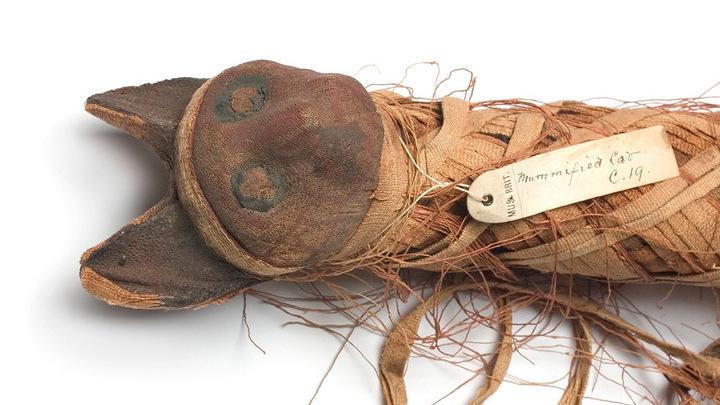 Мумифицированные останки кота, найденные в Древнем Египте.