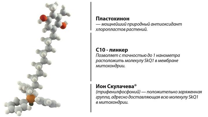SkQ1 уменьшает количество свободных радикалов и активных форм кислорода в митохондриях и спасает клетки от запрограммированной гибели.