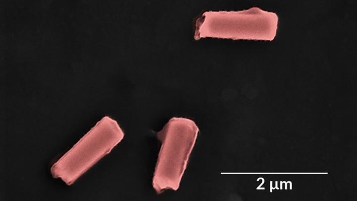 Цветное изображение нанороботов, покрытых мембранами из тромбоцитов и эритроцитов. Снимок сделан при помощи растрового электронного микроскопа.