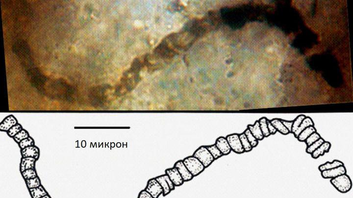 """Биологическое происхождение обнаруженных """"нитей"""" долго оспаривалось."""