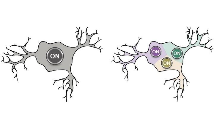 Старая схема функционирования нейрона как возбудимой единицы (слева), а новая √ с чувствительностью слева/справа/снизу.