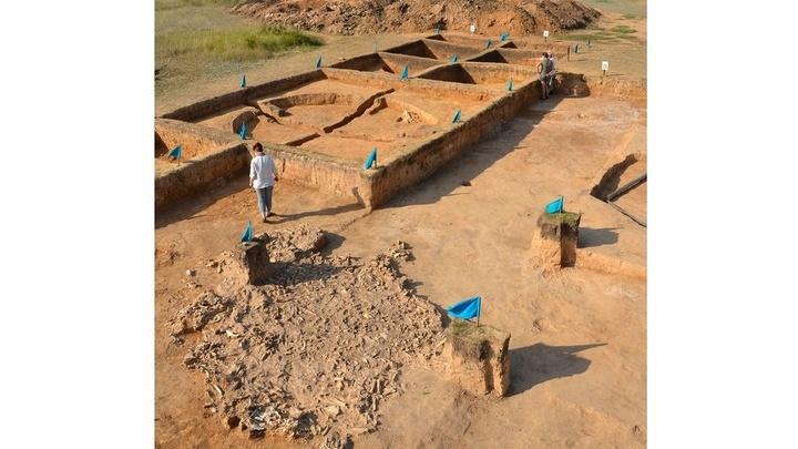Для филогенетического анализа специалисты использовали многочисленные кости и зубы, найденные на двух местах раскопок √ Ботай и Красный Яр.