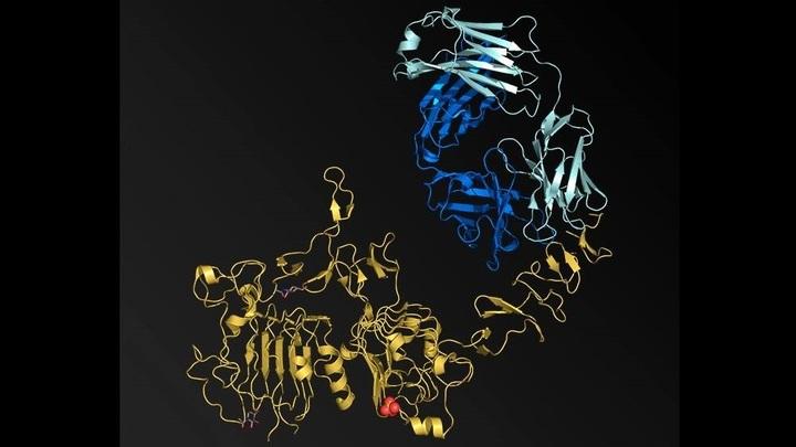 Белок HER2 является важным биомаркером и терапевтической мишенью в лечении рака груди и некоторых других агрессивных форм онкологии.