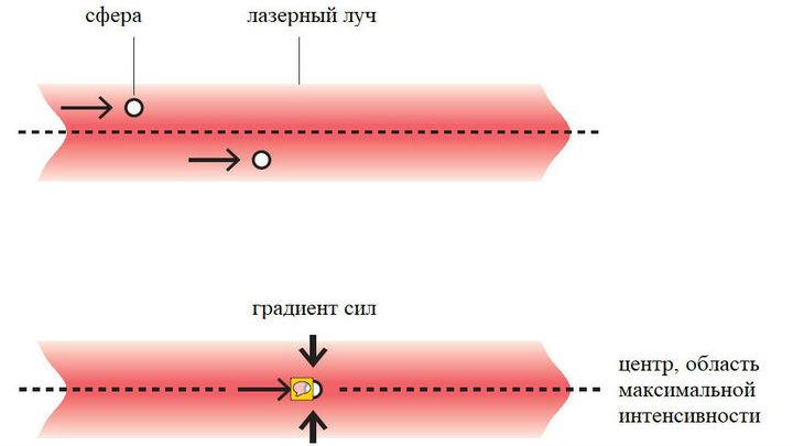 Сила светового давления прижимает образец к центру луча.