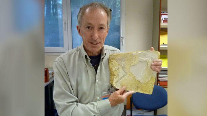 Кости археоптерикса вмурованы в камень, но это не помеха для рентгеновского излучения.