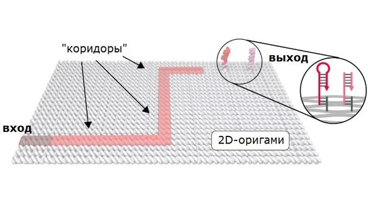 Чтобы помочь ДНК-наноботу выбрать правильный путь из множества вариантов, учёные химически модифицировали выход из лабиринта.