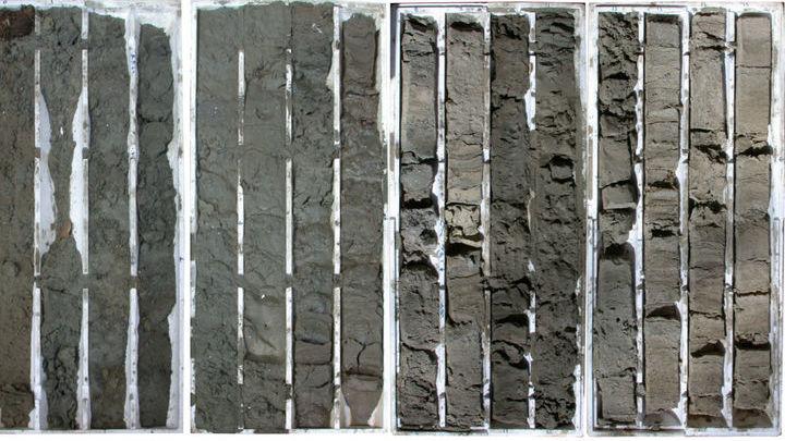 Распределение ископаемых в образцах пород, как оказалось, регулировалось изменениями в местной экологической обстановке.