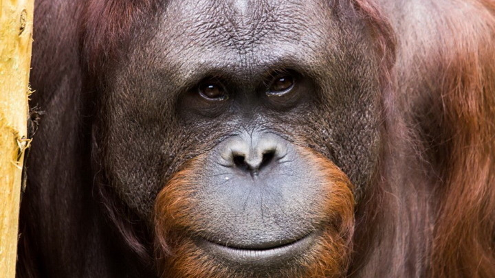 В американском зоопарке привили животных от коронавируса