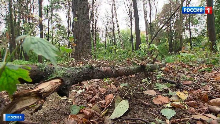 Массовая гибель деревьев в Филевском парке: кто намеренно отравил растения?
