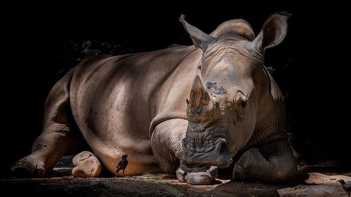 Специалисты впервые получили генетическую информацию о вымершем носороге, обитавшем на территории Евразии более 1,77 миллиона лет назад.
