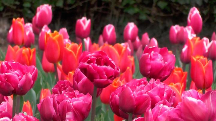 В Москве открылся Весенний фестиваль цветов